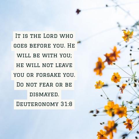 deut 31 8